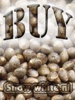 buymarijuanaseeds4.jpg